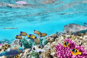 Bucket list Australia. Great Barrier Reef