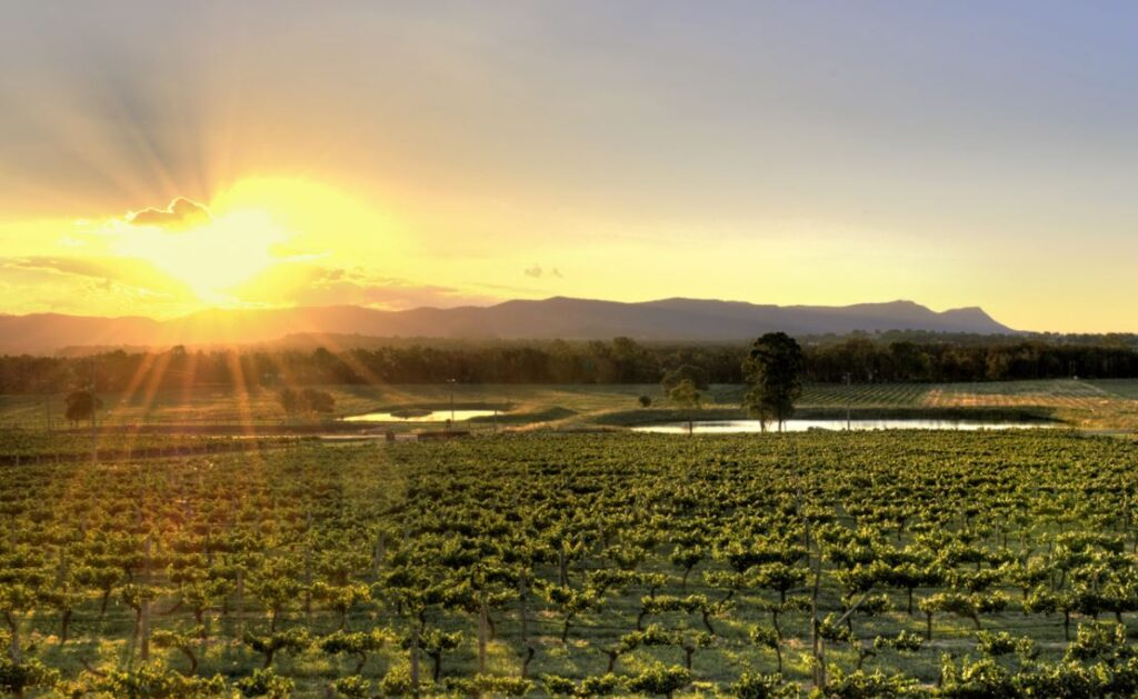 7 Life Changing Road Trips in Australia! The Hunter Valley